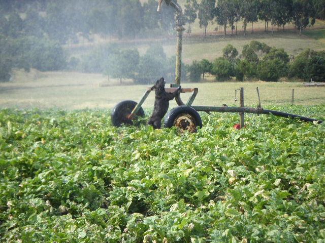 Lister & irrigator 3