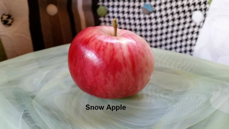 Snow Apple
