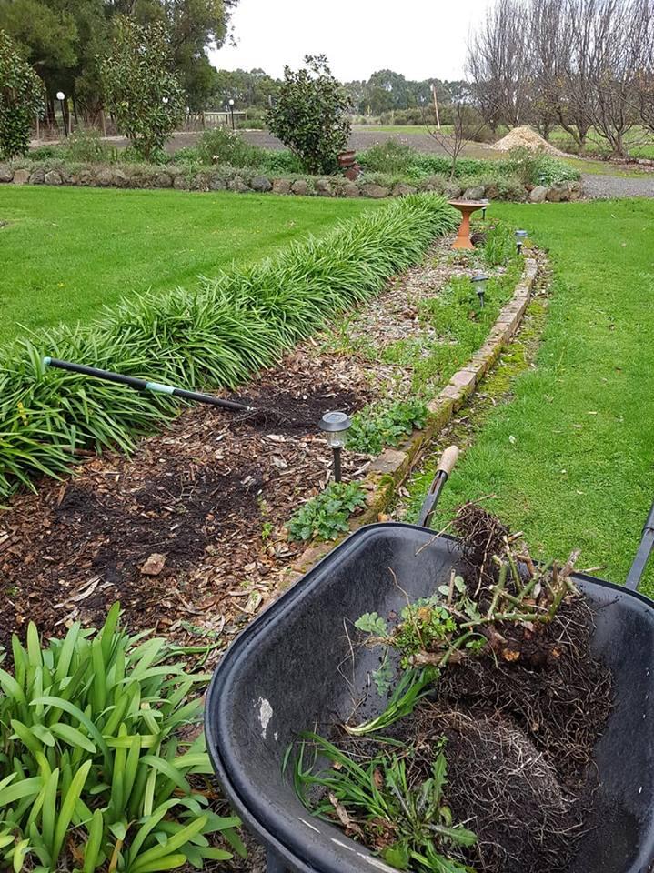 Rose garden before