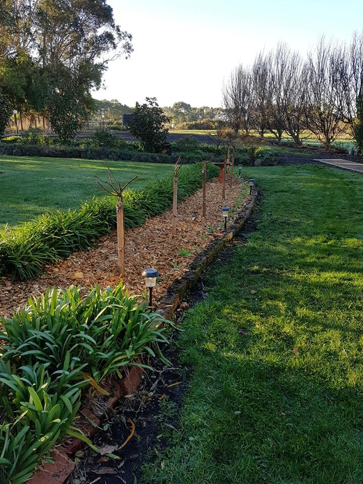 Rose garden after
