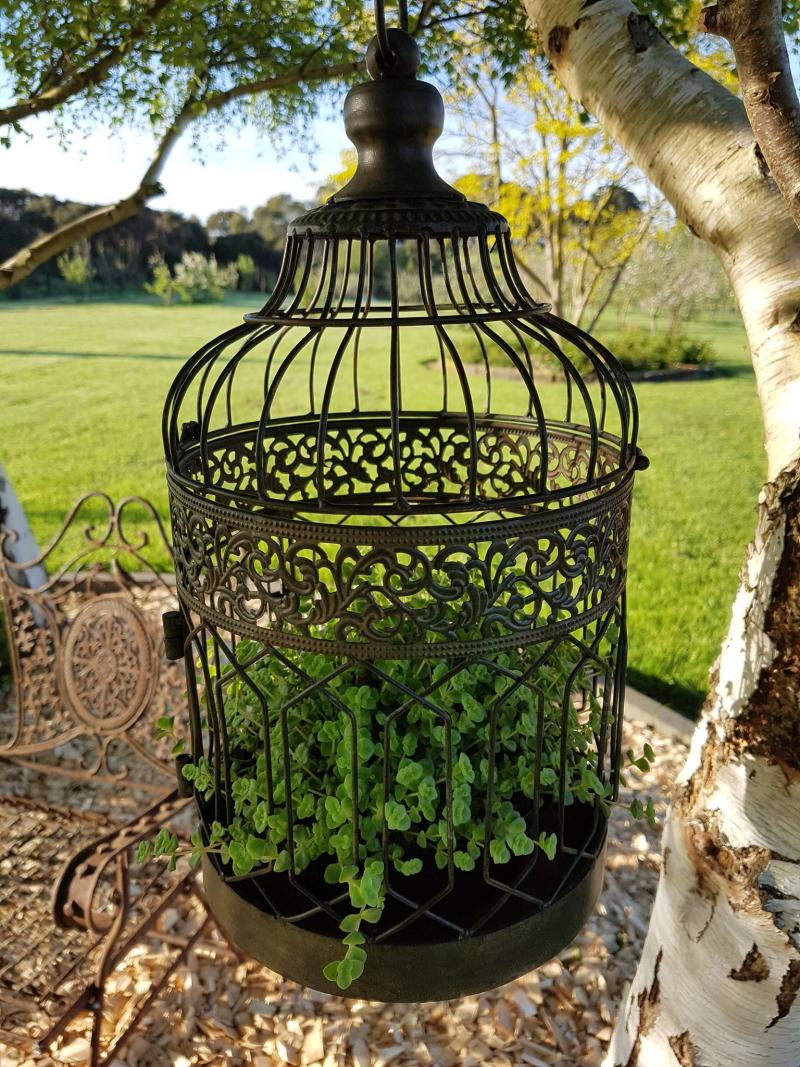Garden bird cage succulent