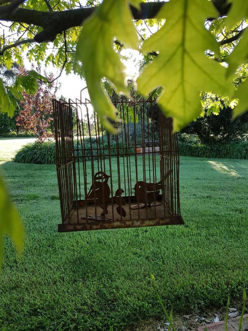 Garden bird cage birds