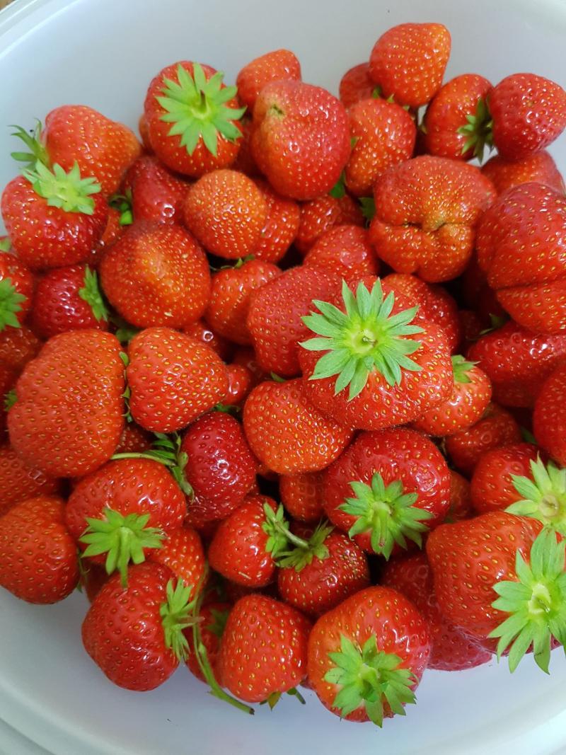Berry 1