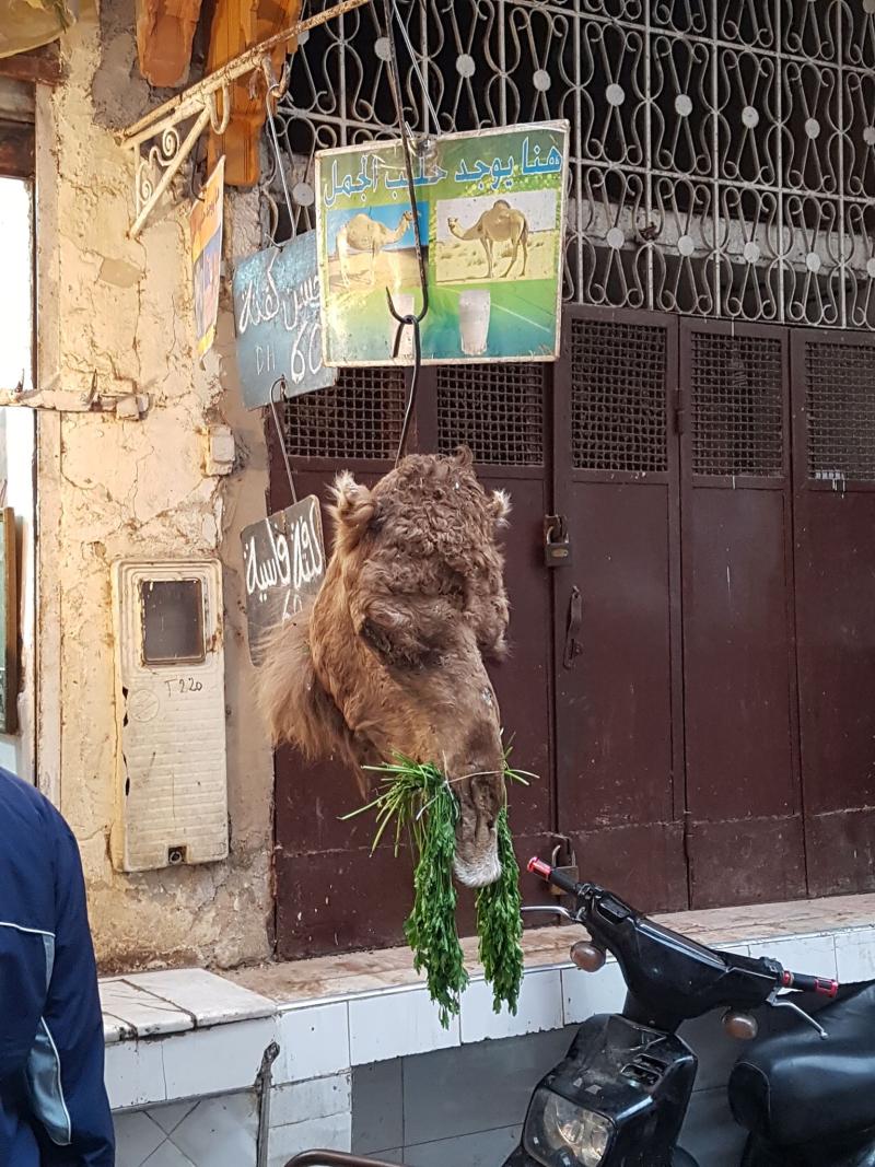 Fez medina camel