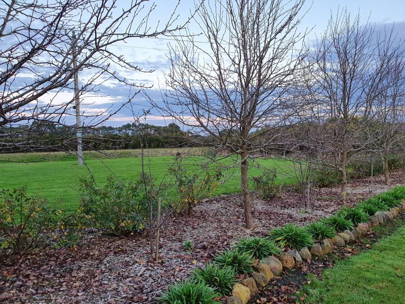 New garden trees