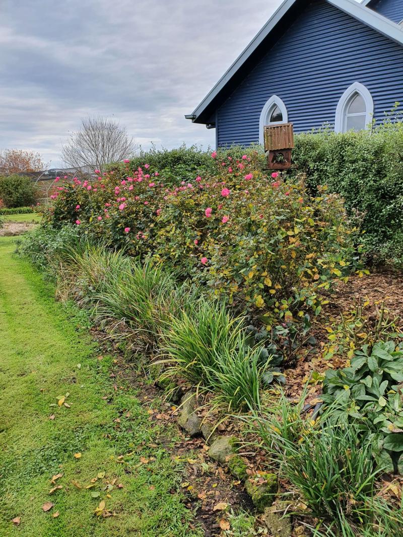 Lockdown gardening 2