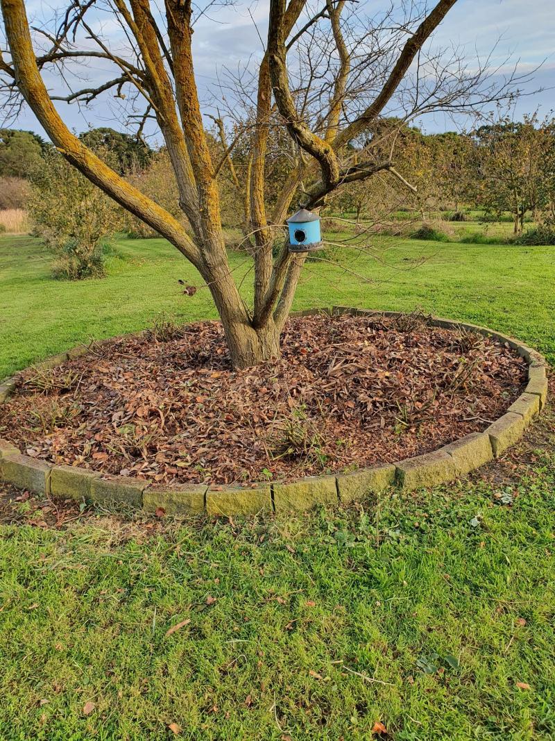 Lockdown gardening 7