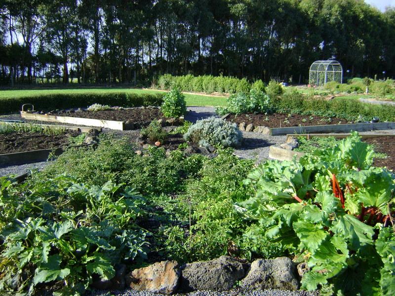 Vegie_garden